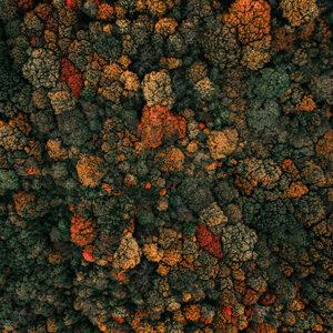 group of lichen