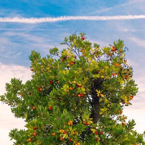 top of fruit tree